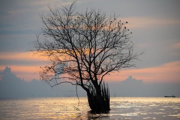 Beautiful sunrise on a lake with a tree