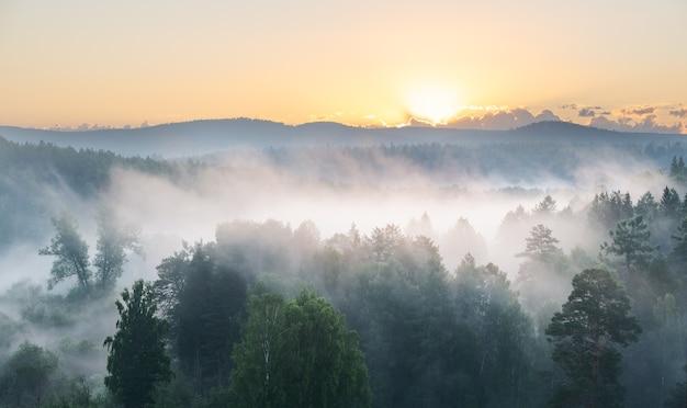 Красивый восход солнца над туманным лесом