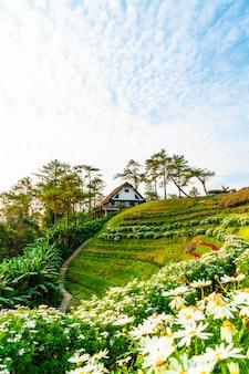 Beautiful sunrise sky with garden on mountain at huai nam dang national park