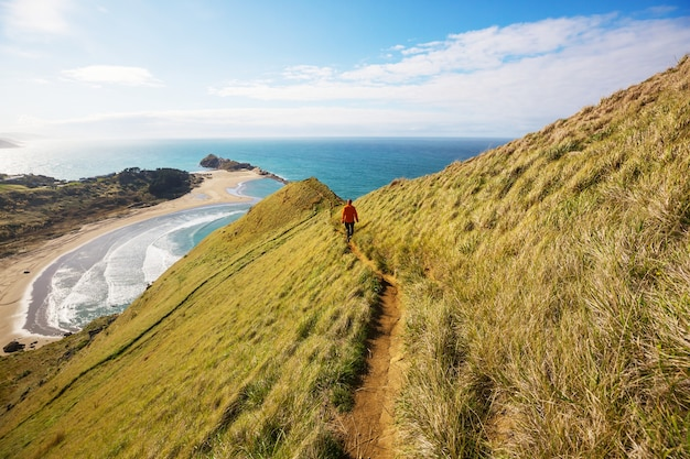 ニュージーランドのオーシャンビーチの美しい夕日。
