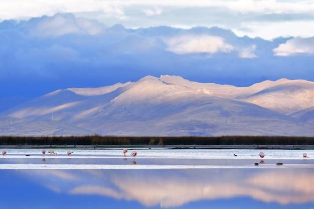 ジュニン湖のほとりに沈む美しい夕日とフラミンゴの群れが水中で休んでいます