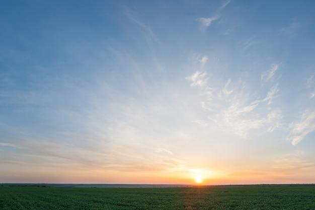녹색 밀밭 위에 아름다운 일몰, 장엄한 저녁 하늘과 농업 풍경
