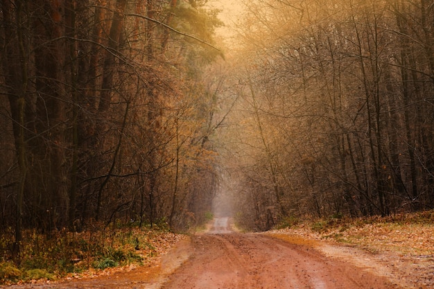 秋の森の美しい夕日の風景
