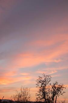 Bellissimo tramonto e paesaggio di alberi