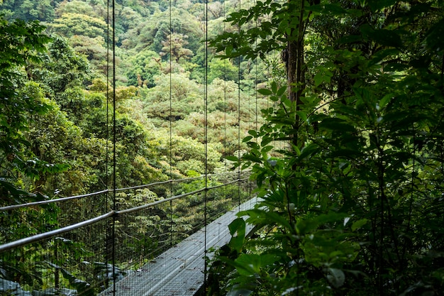 Beautiful suspension bridge in rainforest at costa rica