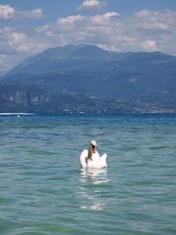 Beautiful swan view to lake garda and mountains
