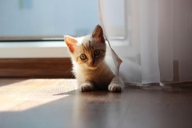 A beautiful tabby kitten lies on the floor
