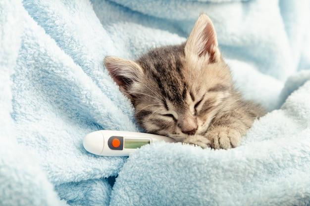 아름다운 얼룩 고양이는 온도계로 온도를 측정합니다. 작은 아픈 아기 고양이는 파란색 격자 무늬에 놓여 있습니다. 애완 동물과 고양이를 위한 수의사, 수의과 진료소 및 수의학, 동물 어린이 건강 관리.