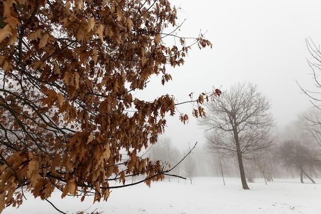 Красивые высокие зрелые деревья зимой покрыты снегом в морозную погоду