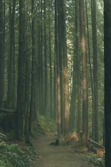 Beautiful tall trees in a forest