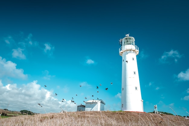 A beautiful tall white lighthouse on the blue sky background. cape egmont lighthouse, new plymouth, new zealand.