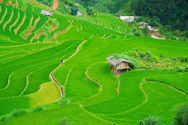 Красивые террасы рисовых полей
