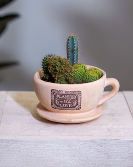 サボテン、花、岩、ギグカップ内の砂、マグカップが美しいテラリウム