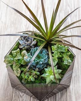 ガラスの中のジューシーなサボテン、花、岩、砂が美しいテラリウム