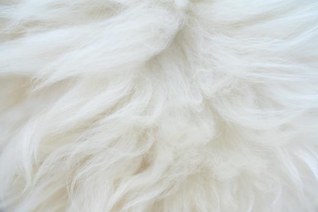 두툼하고 푹신한 흰색 동물 모피가 아름답습니다. 자연 배경입니다.