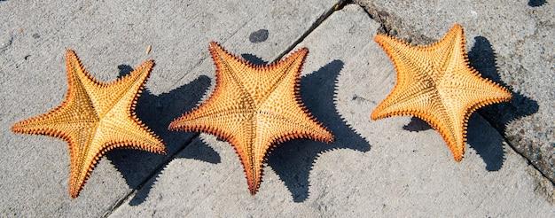 화창한 야외 회색 시멘트 배경에 아름다운 3개의 카리브해 불가사리 오렌지 색상