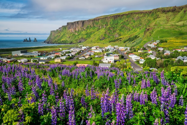 Beautiful town of vik i myrdal iceland in summer.