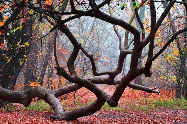 Beautiful tree in autumn morning foggy park. bright autumn background.