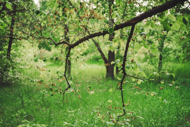 Beautiful tree branches on bokeh background of rich greenery.