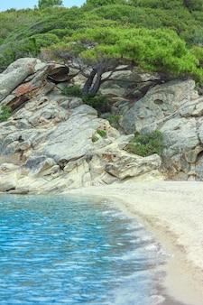 자연 배경에서 바다로 아름 다운 나무
