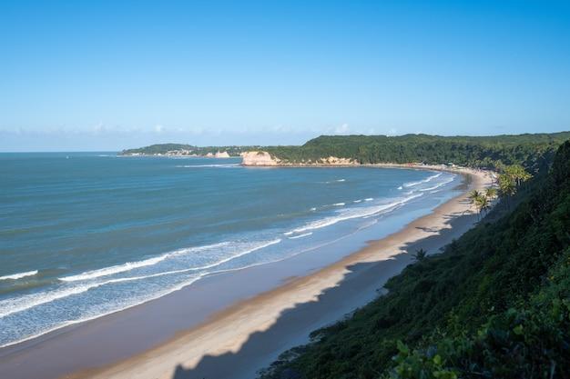 Красивый покрытый деревьями пляж у спокойного океана
