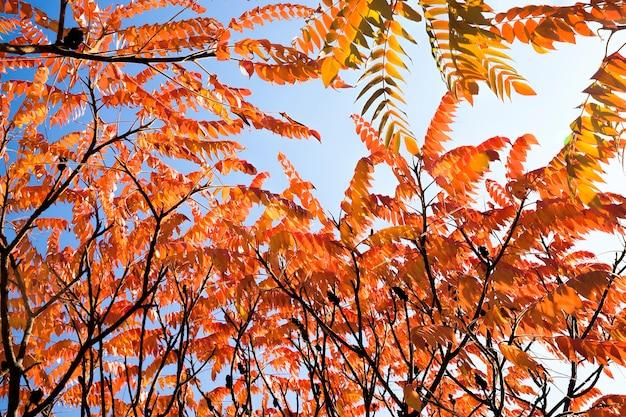赤い葉を持つ美しい樹冠