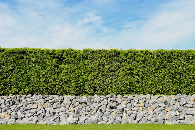 Beautiful tree fence,green field and stone with blue sky