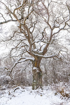 A beautiful tree frozen by the winter snow. snow in the town of opakua near vitoria