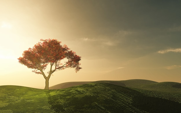 시골에서 아름 다운 나무