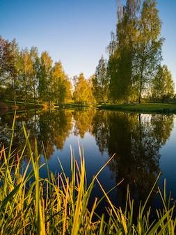 晴れた日の湖の美しい木の反射