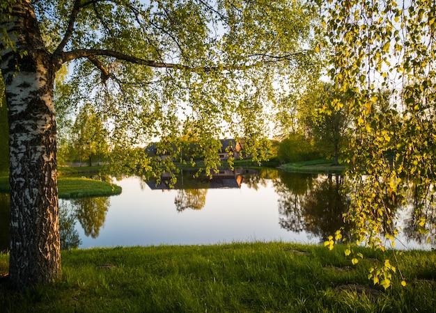 晴れた春の日の湖の美しい木の反射-白樺の枝を通して緑の春の色