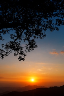 Beautiful tree silhouette in dramatic sunset sky