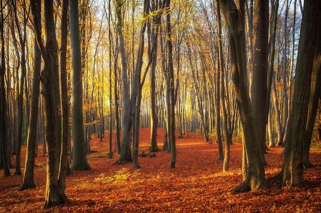 가을 공원이나 숲의 아름다운 나무