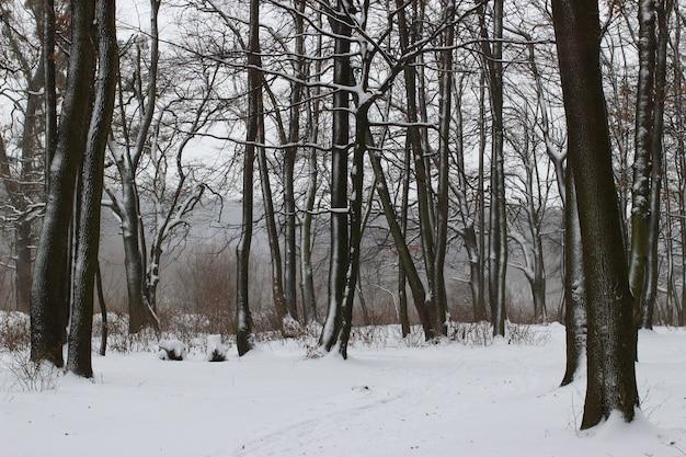 겨울 공원의 아름다운 나무