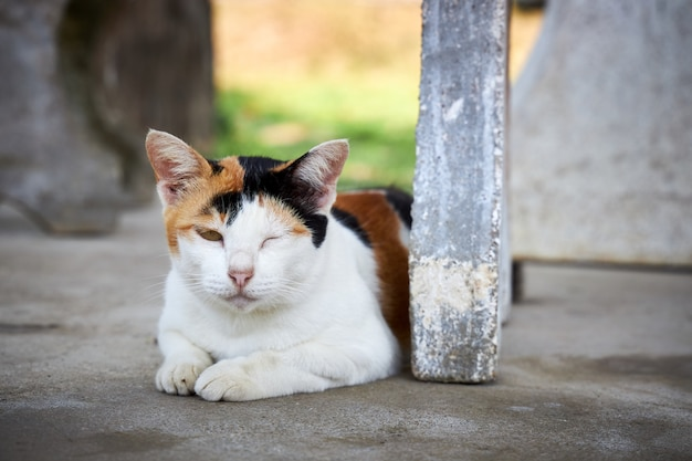 Beautiful tricolor cat sleeping on floor covering on e eye