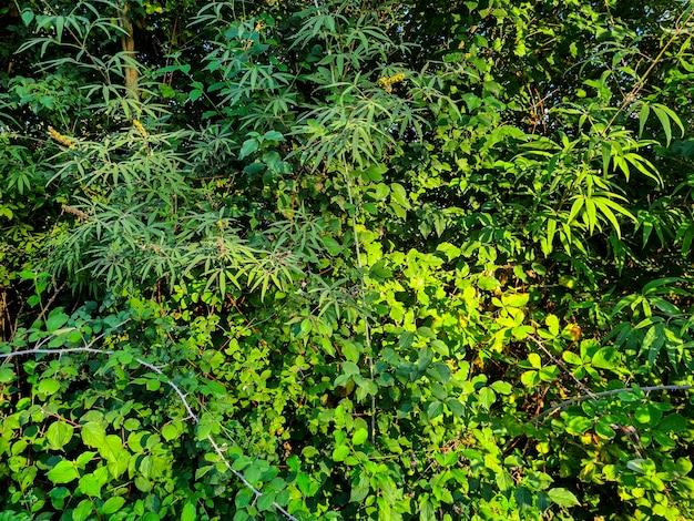 많은 식물이 있는 아름다운 열대 배경