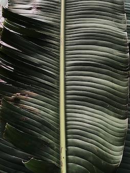 美しい熱帯のバナナの椰子の枝。ミニマルなパターンとレトロとヴィンテージのグリーンカラーフィルター付き