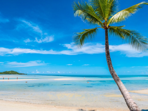 Beautiful tropical beach and sea with coconut palm tree