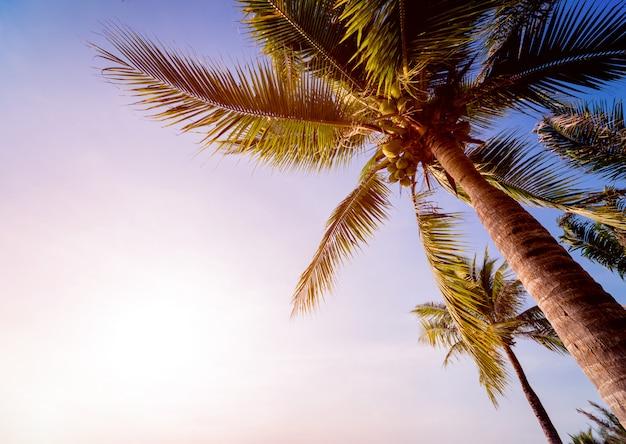 Красивый тропический пляж с пальмами.