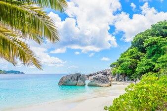Beautiful tropical beach