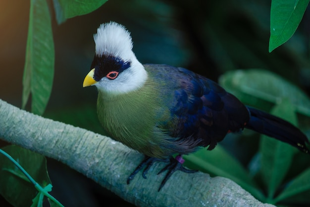 Beautiful tropical bird with a white head in the park