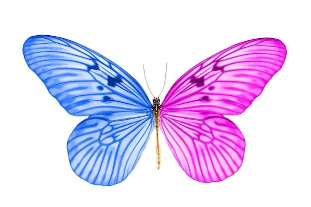 Красивая тропическая сине-фиолетовая бабочка.