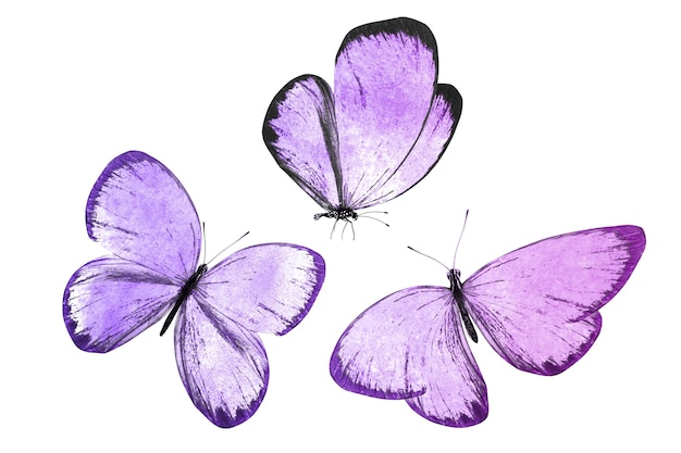 Beautiful tropical butterflies isolated
