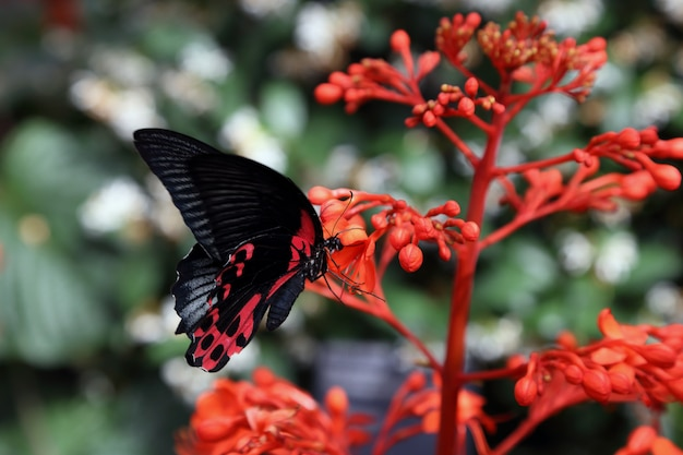 Beautiful tropical butterfly on blurred nature background