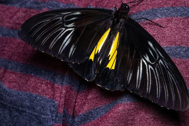 어두운 배경에 아름 다운 열 대 나비를 닫습니다.