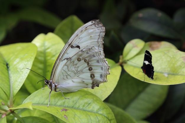 Красивая тропическая бабочка на размытом фоне природы