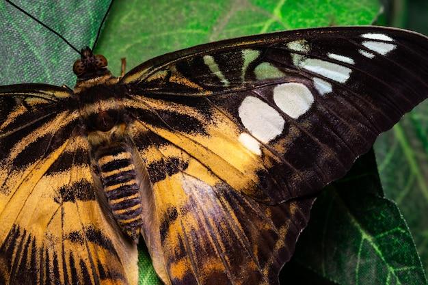 緑の葉の上の美しい熱帯蝶。自然の美しさ。