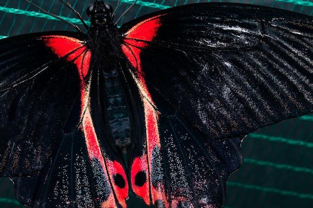 網の上の美しい熱帯蝶。自然の美しさ。
