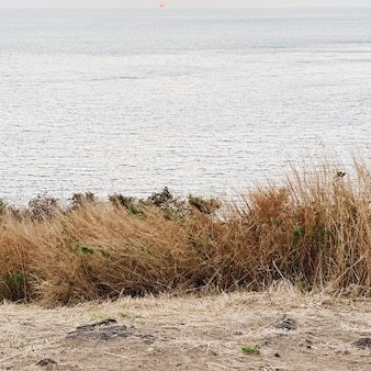 Красивый вид на тропическое побережье с белым песком, синим океаном, длинной травой и мягким закатом на пхукете, таиланд