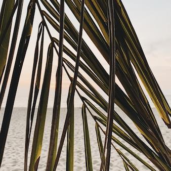 海と白い砂浜のコストでカラフルな夕日に対して美しい熱帯のココナッツ椰子の枝。ミニマルなパターンとレトロとヴィンテージの温かみのある色